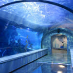 Tunnel - Polk Penguin Conservation Center